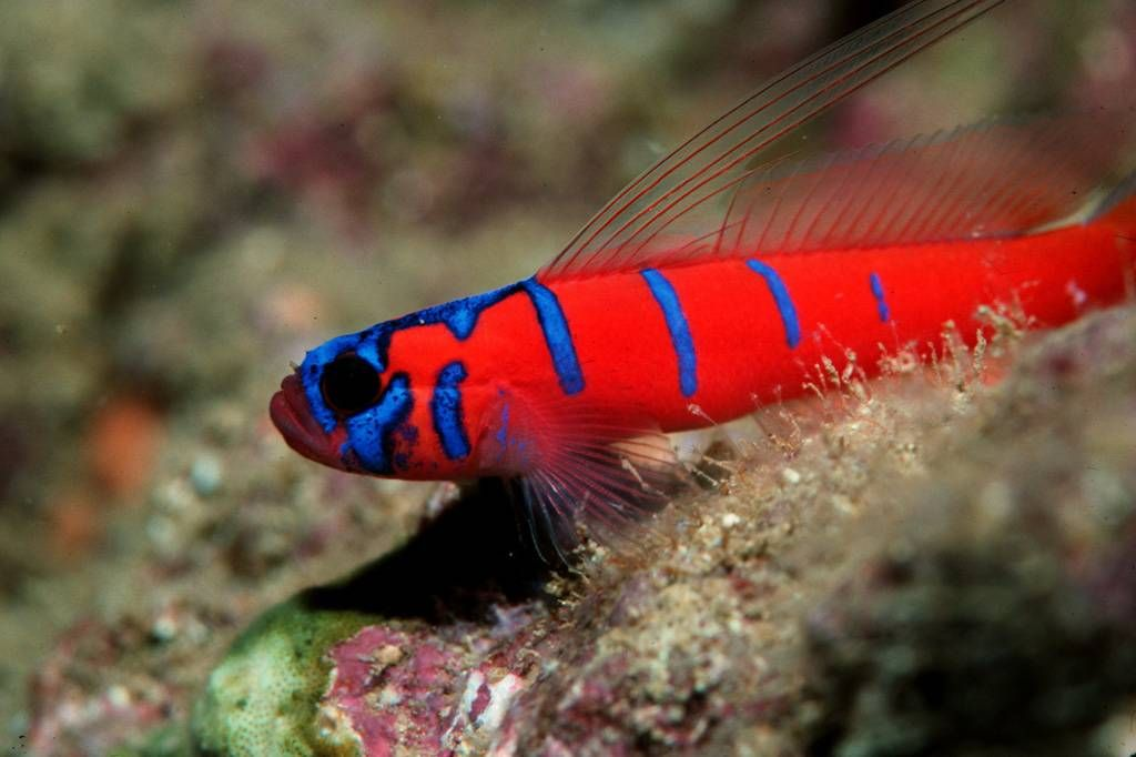 Top 6 best smartest fish freshwater in the world fish aquariums catalina goby actually probably not because it does not tolerate tropical temperature publicscrutiny Images