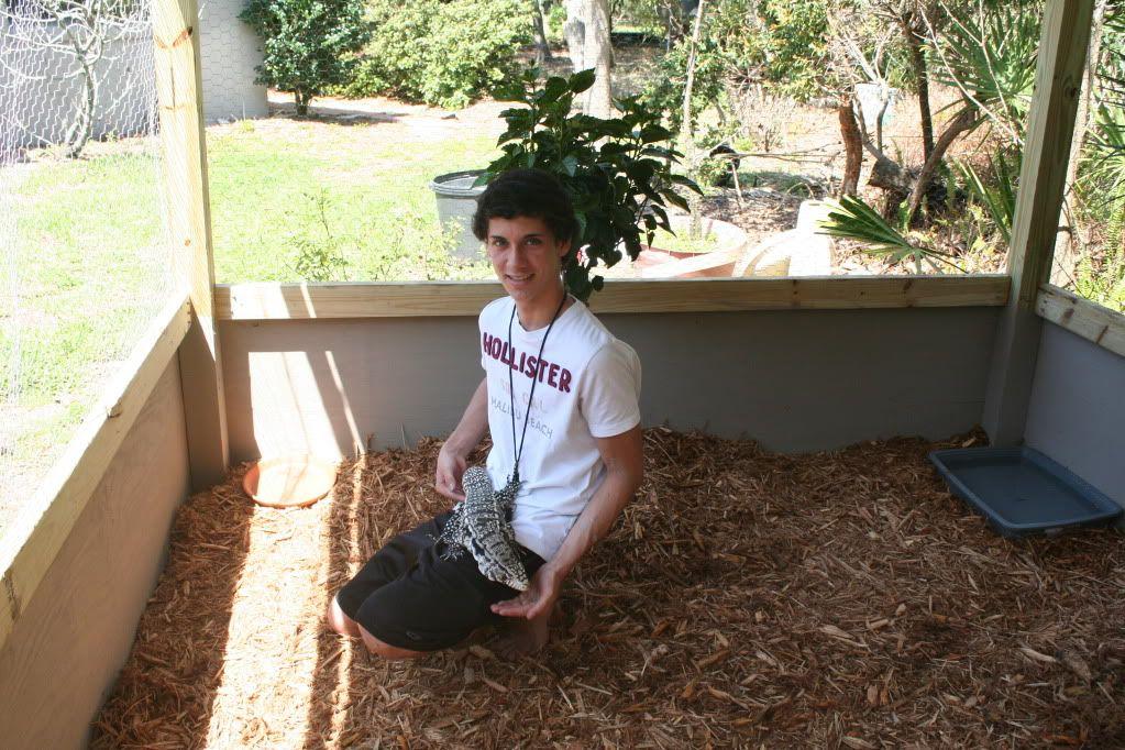 outdoor tegu enclosure google search reptiles pinterest