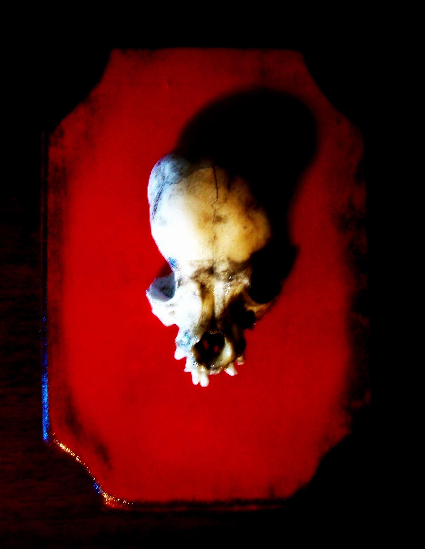 Chihuahua Dog Skull Johnny Hellion