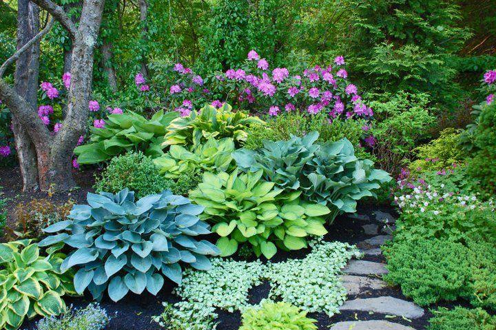 Hydrangea And Azalea Landscaping
