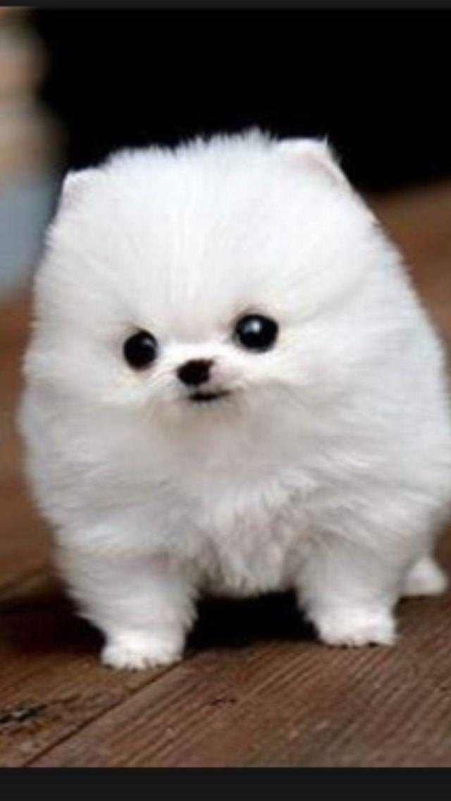 OMG. I've never seen a dog like this lol Cute dogs, Cute