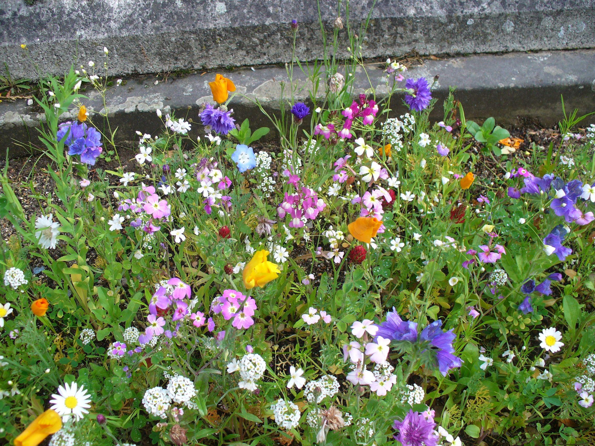 English Garden English Scented Wildflower GroMat