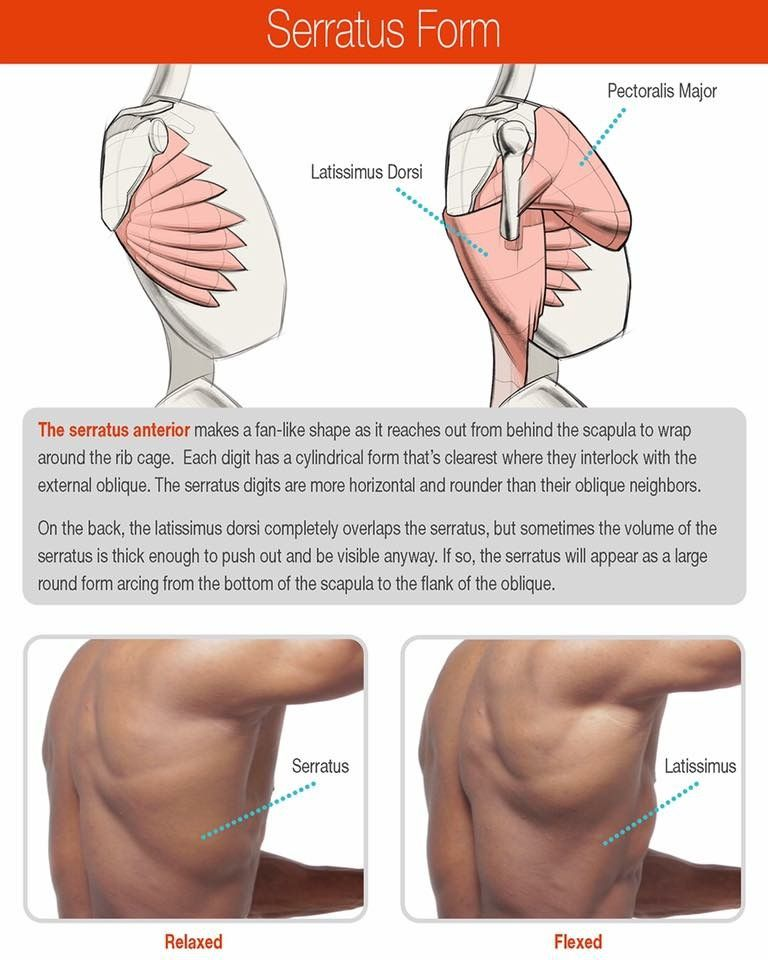 Pin by April May on Draw - Muscles, Bone, and Body Structure ...