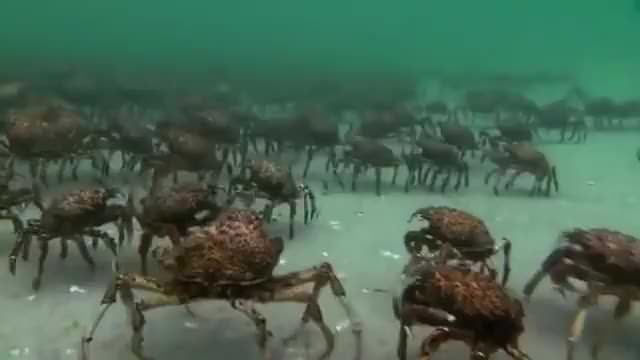 Crab army! | 9gag | Friday humor, Best funny pictures, R gifs