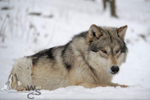 Geronimo im Schnee.
