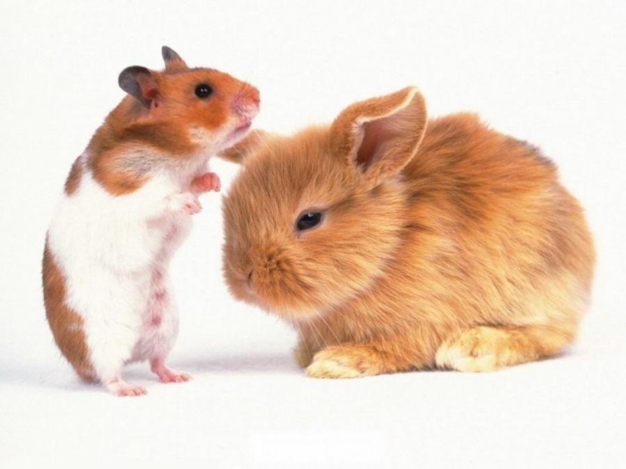 Rabbit And Hamster Animal Photo Animals Animal Antics