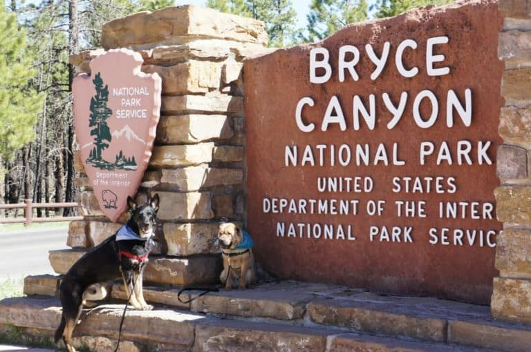 Activities With Dogs Near Bryce and Zion National Parks in