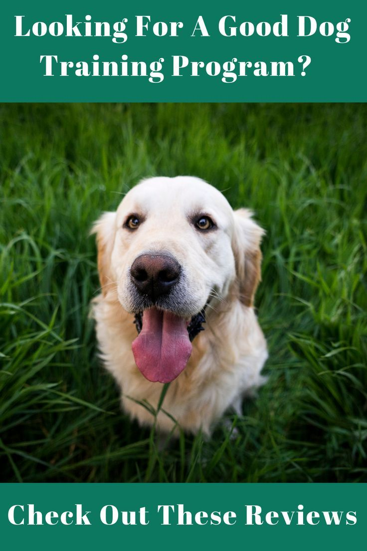 Need A Dog Leash Course What Are The Best Online Training Courses