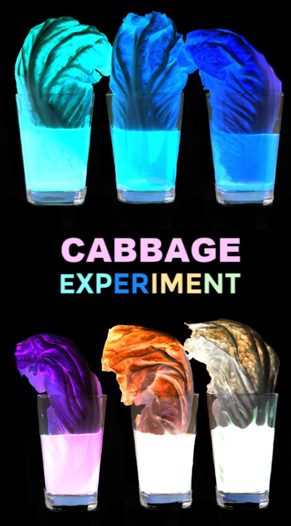 Rainbow Cabbage Experiment Science Experiments Kids Cool Science Experiments Fun Science