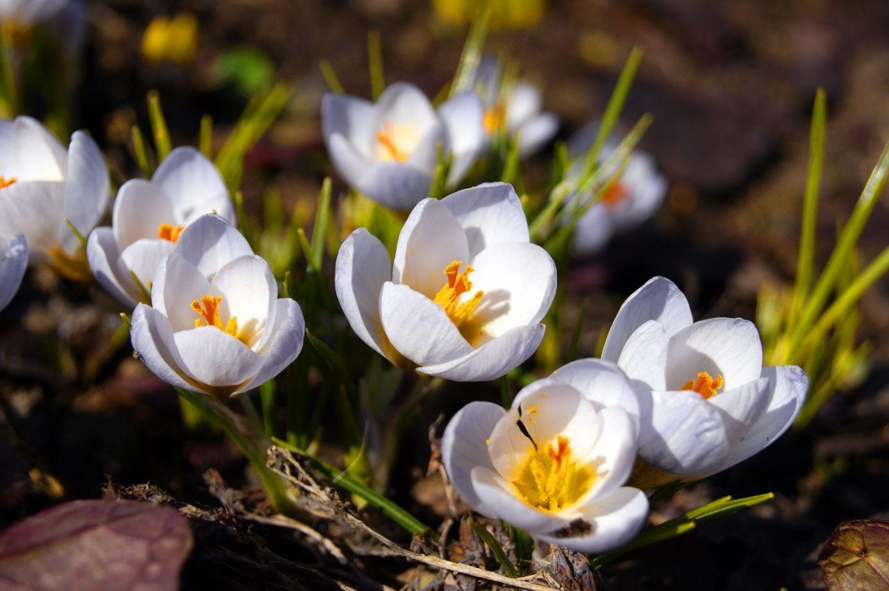 весенние цветы фото - Поиск в Google