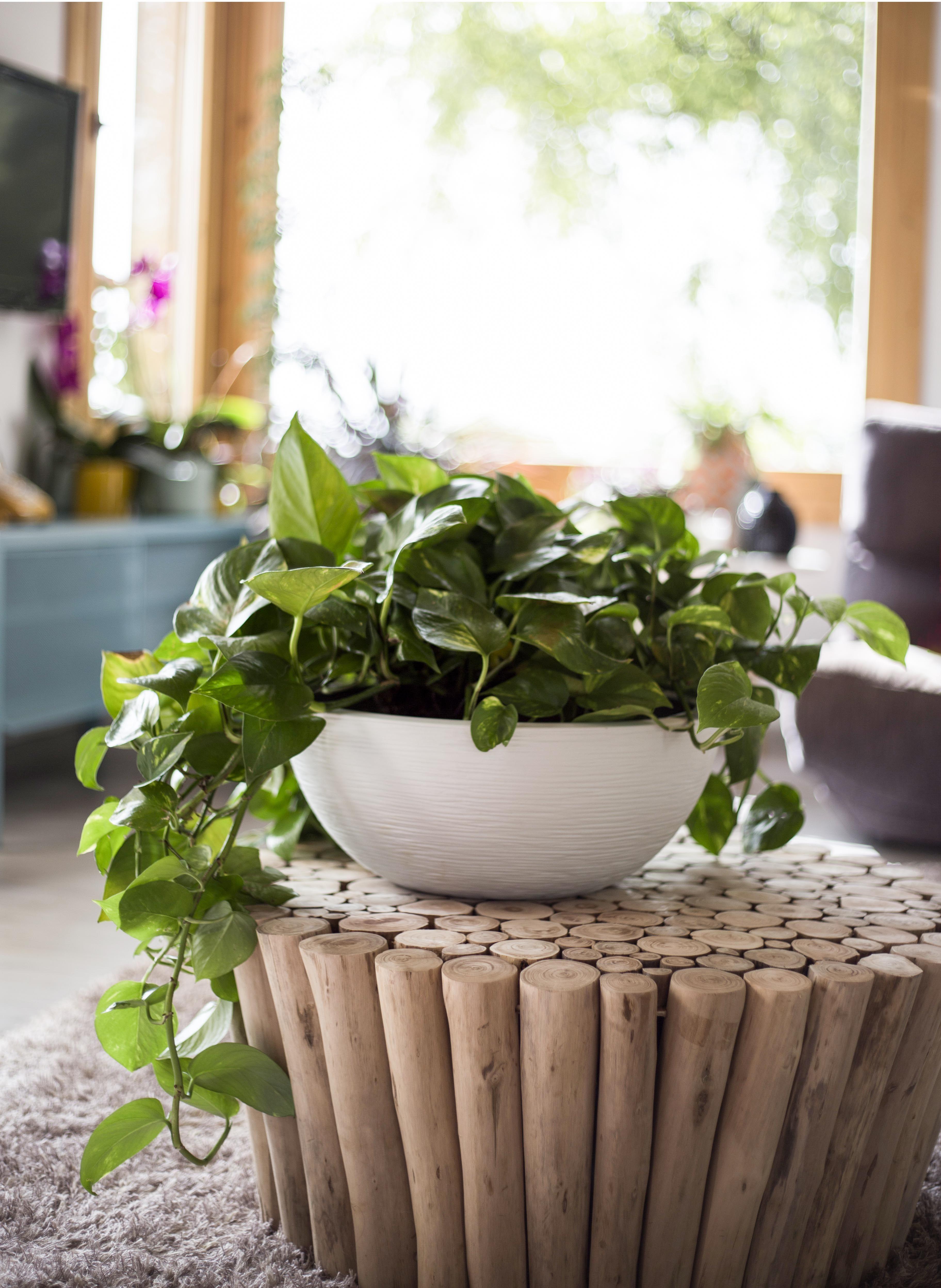 Mettez en valeur vos plantes préférées avec notre vasque Graphit ...