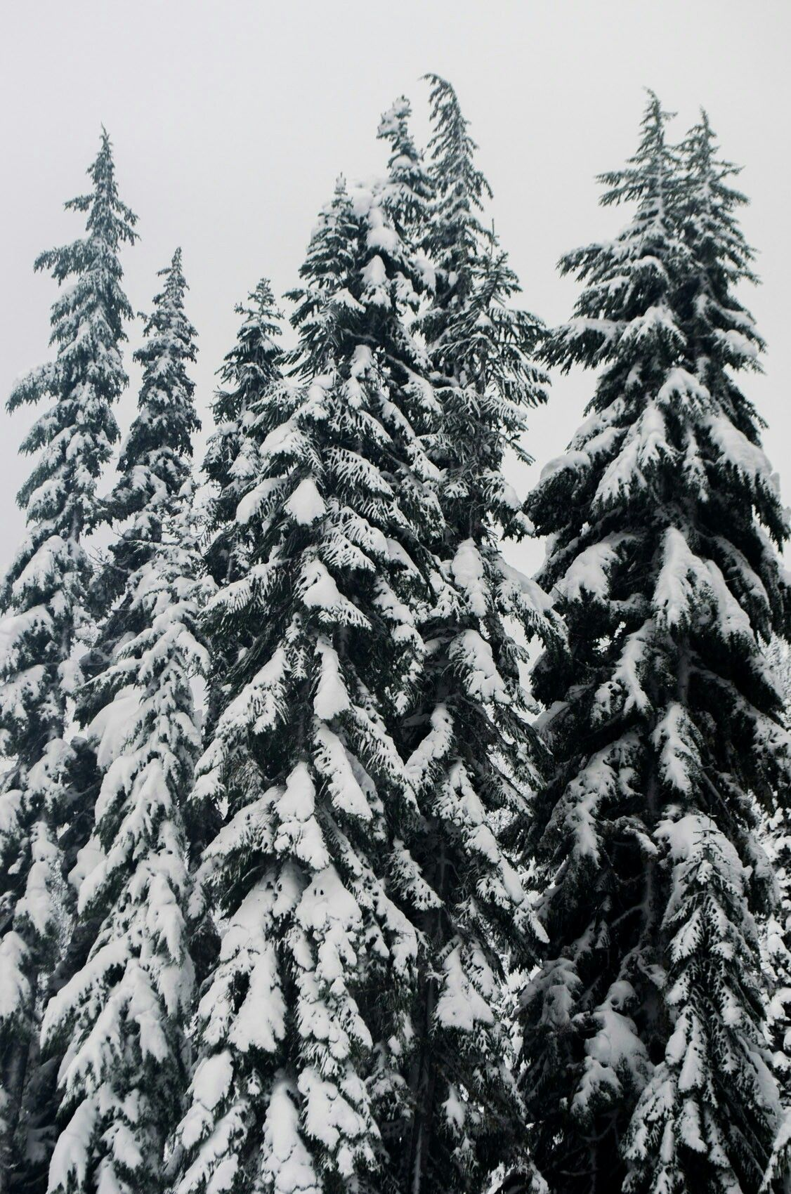 Winter Christmas Aesthetic Winter Christmas Winter Wonderland