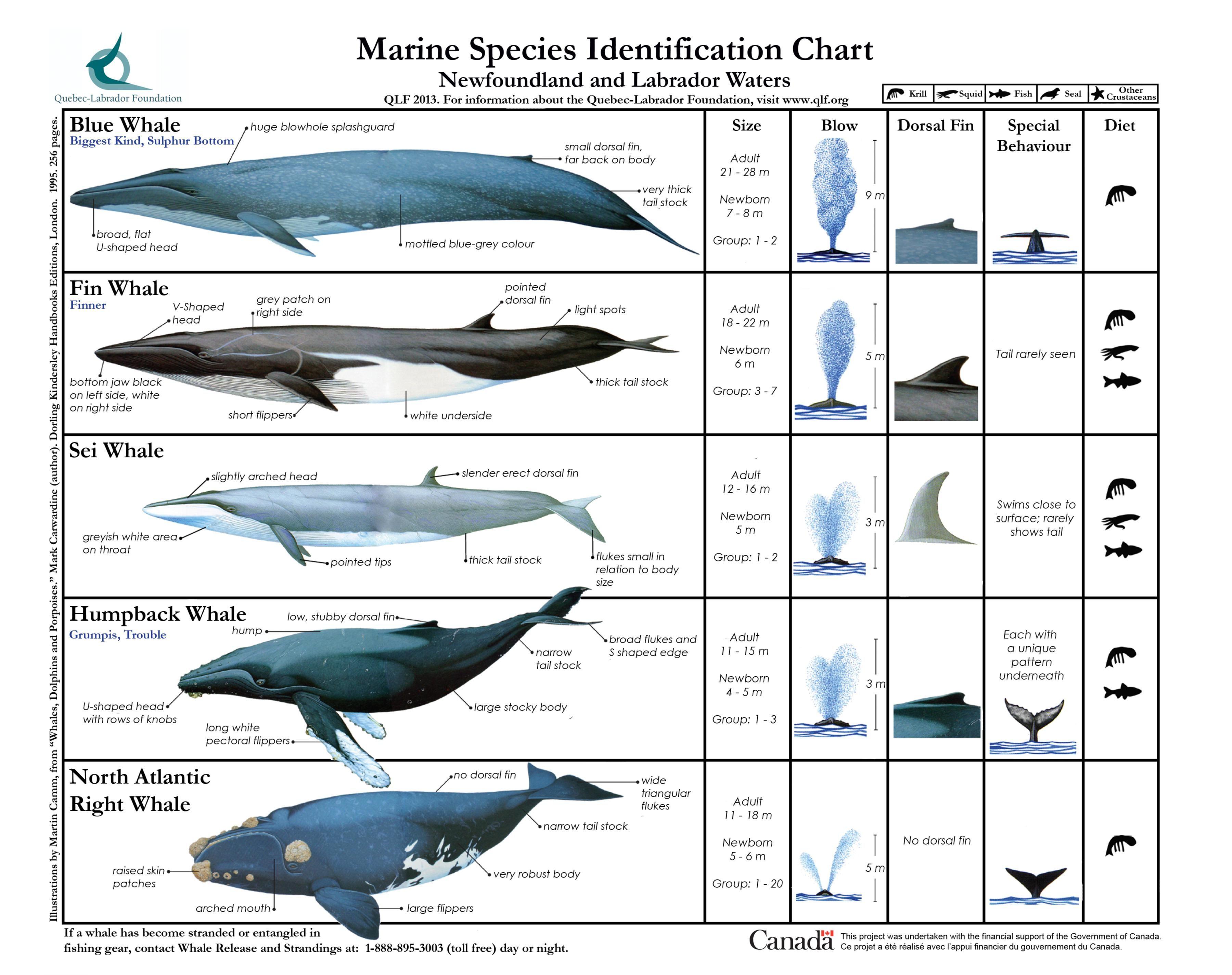 Types Of Whales Diagram - Online Schematic Diagram •