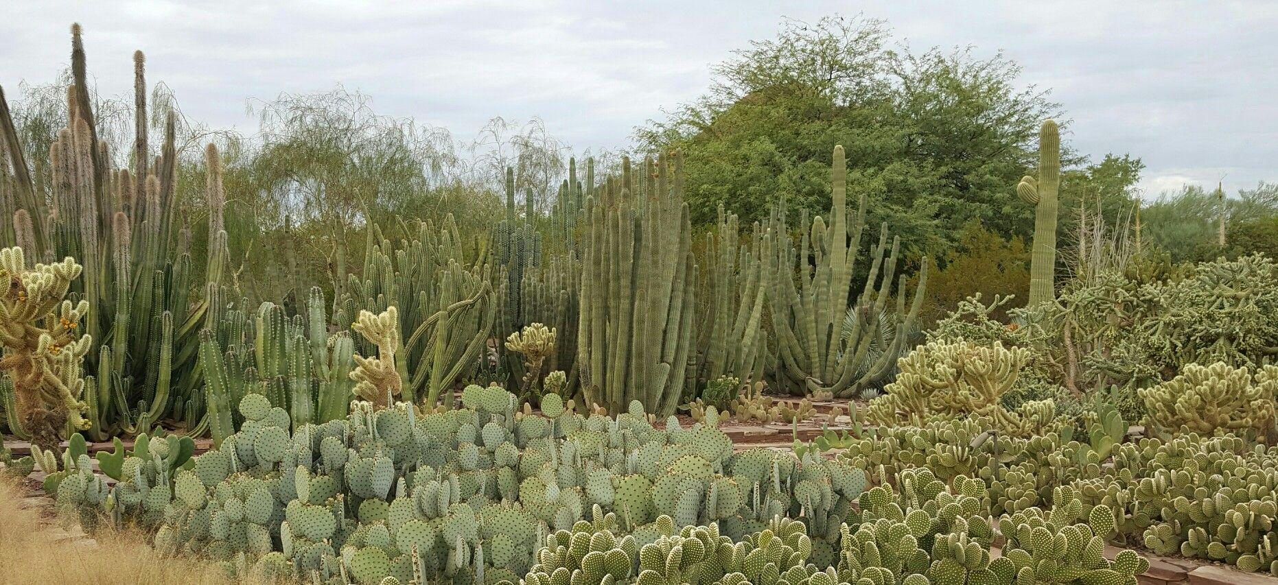 Desert Botanical Gardens, Tempe, AZ | Cactus | Pinterest | Desert ...