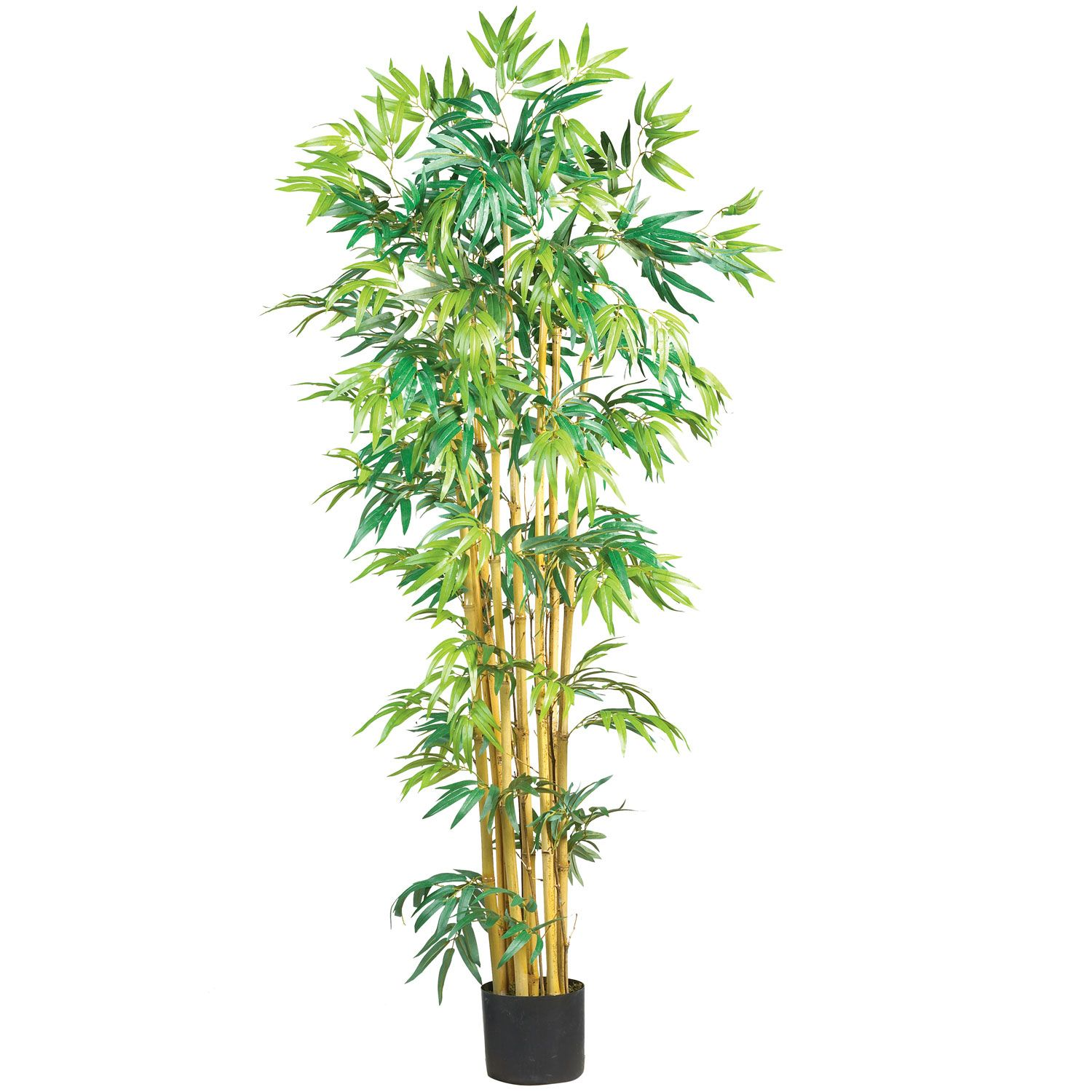 5\' Multi Bambusa Bamboo Silk Tree | Silk tree, Bamboo tree and Silk