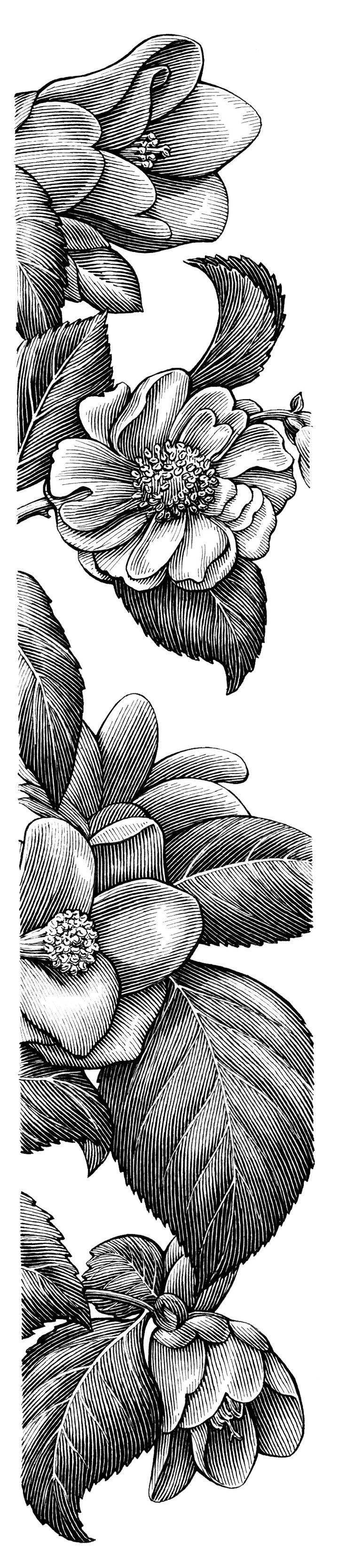 Detailed Black White Floral Drawing Art Pinterest Floral