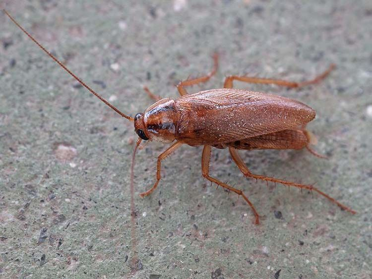 how to get rid of roaches in your home naturally