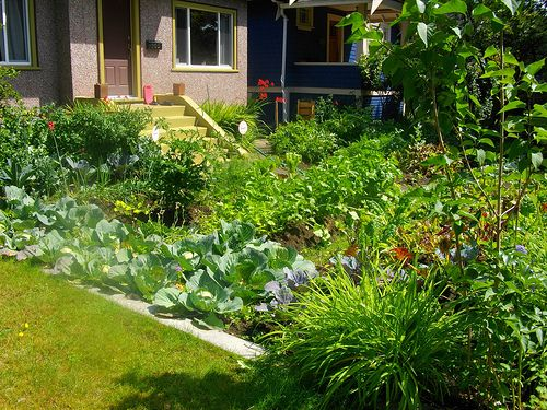 front yard veggie garden by urbanwild via flickr - Front Yard Vegetable Garden Ideas