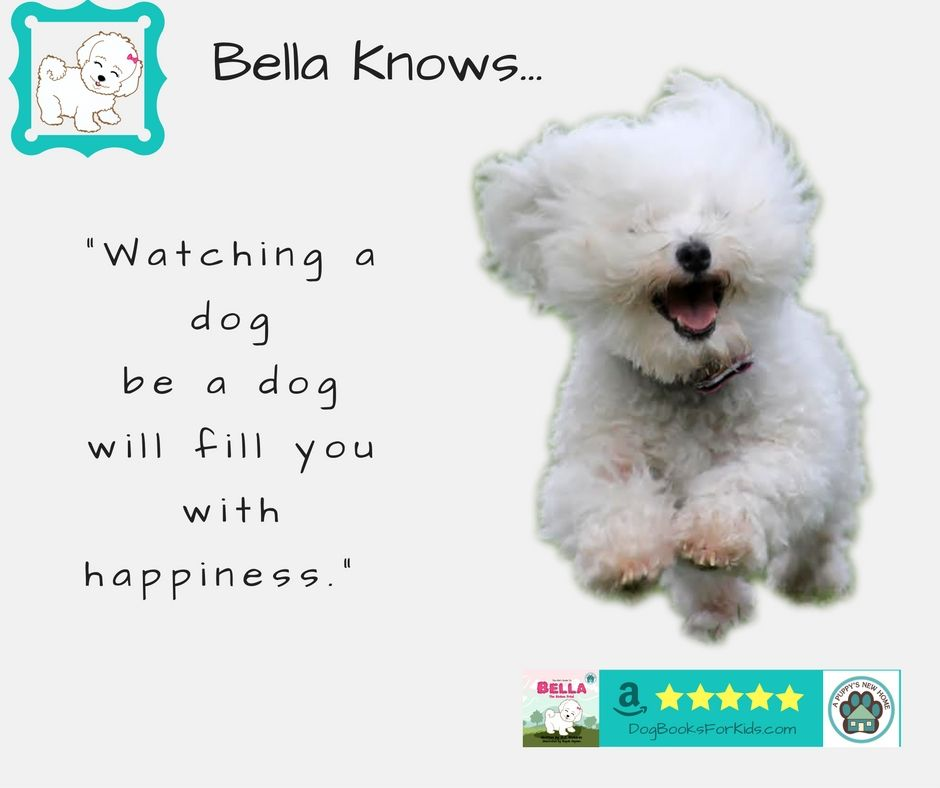 Bella Knows...Watching a dog be a dog will fill you with happiness. #BellaKnows #Bichon #Happiness #DogBooksForKids.com