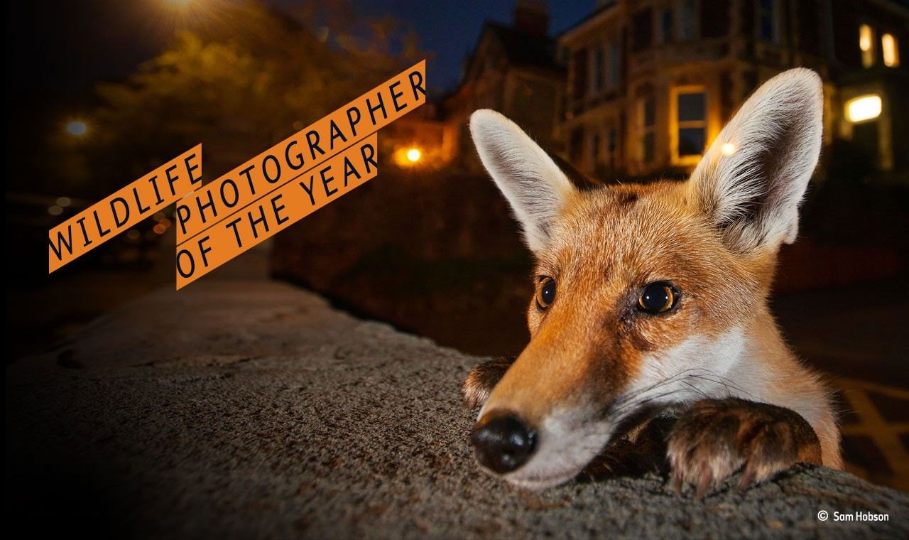 Wpy52 Tickets Now On Sale To See The 100 Winners And Finalists Of 2016 S Wildlife Photographer Of Photography Exhibition Wildlife Photography History Museum