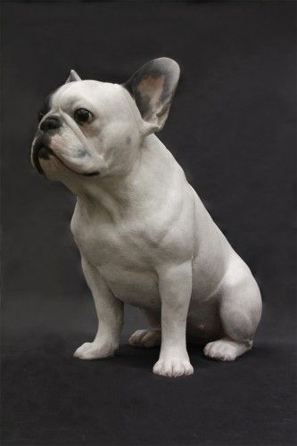 French Bulldog, Frenchie, Hyper Realistic Sculpture made of polychromed polyester resin, 2013, by Gerard Mas