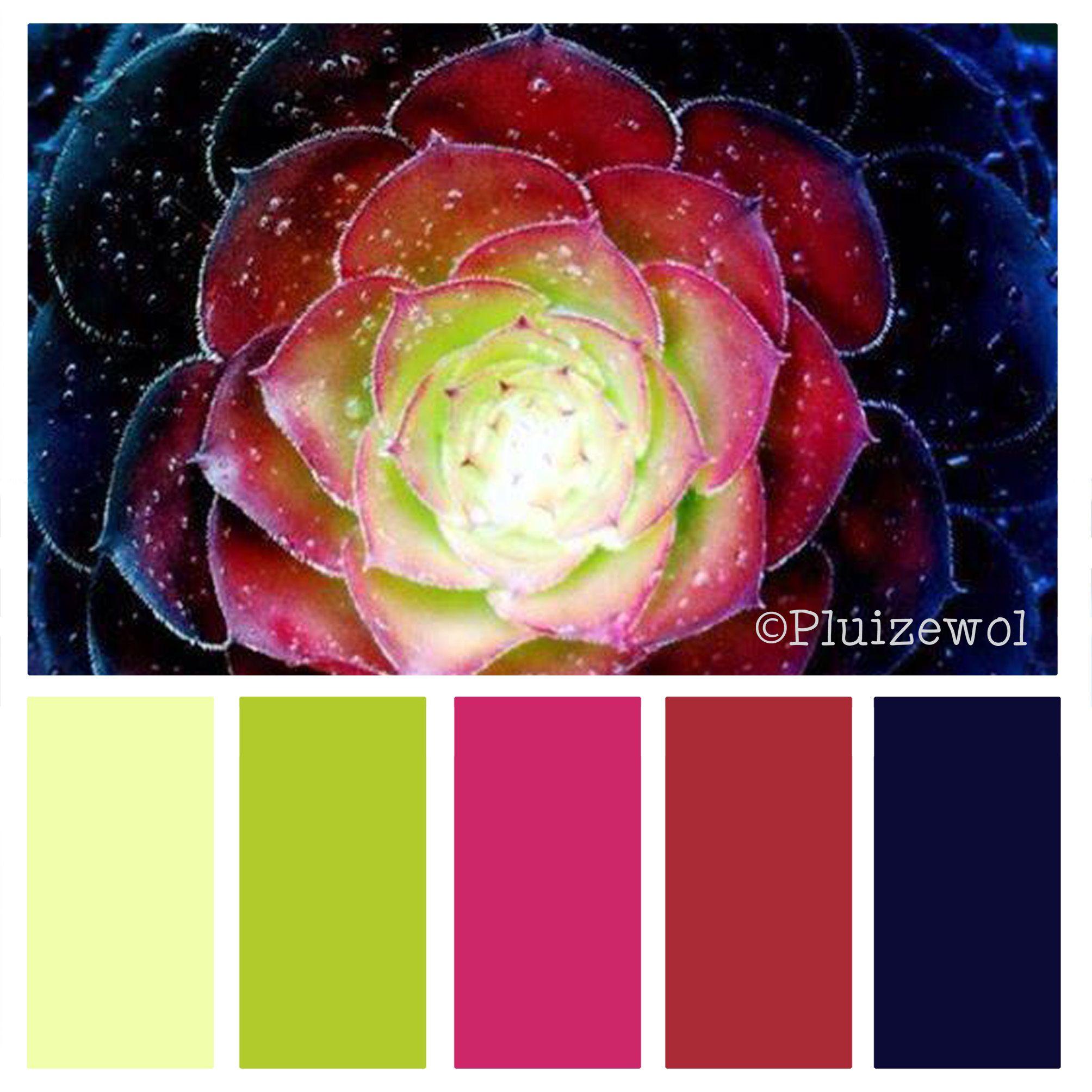 Kleurinspiratie Pluizewol - Plant   COLORS   Pinterest