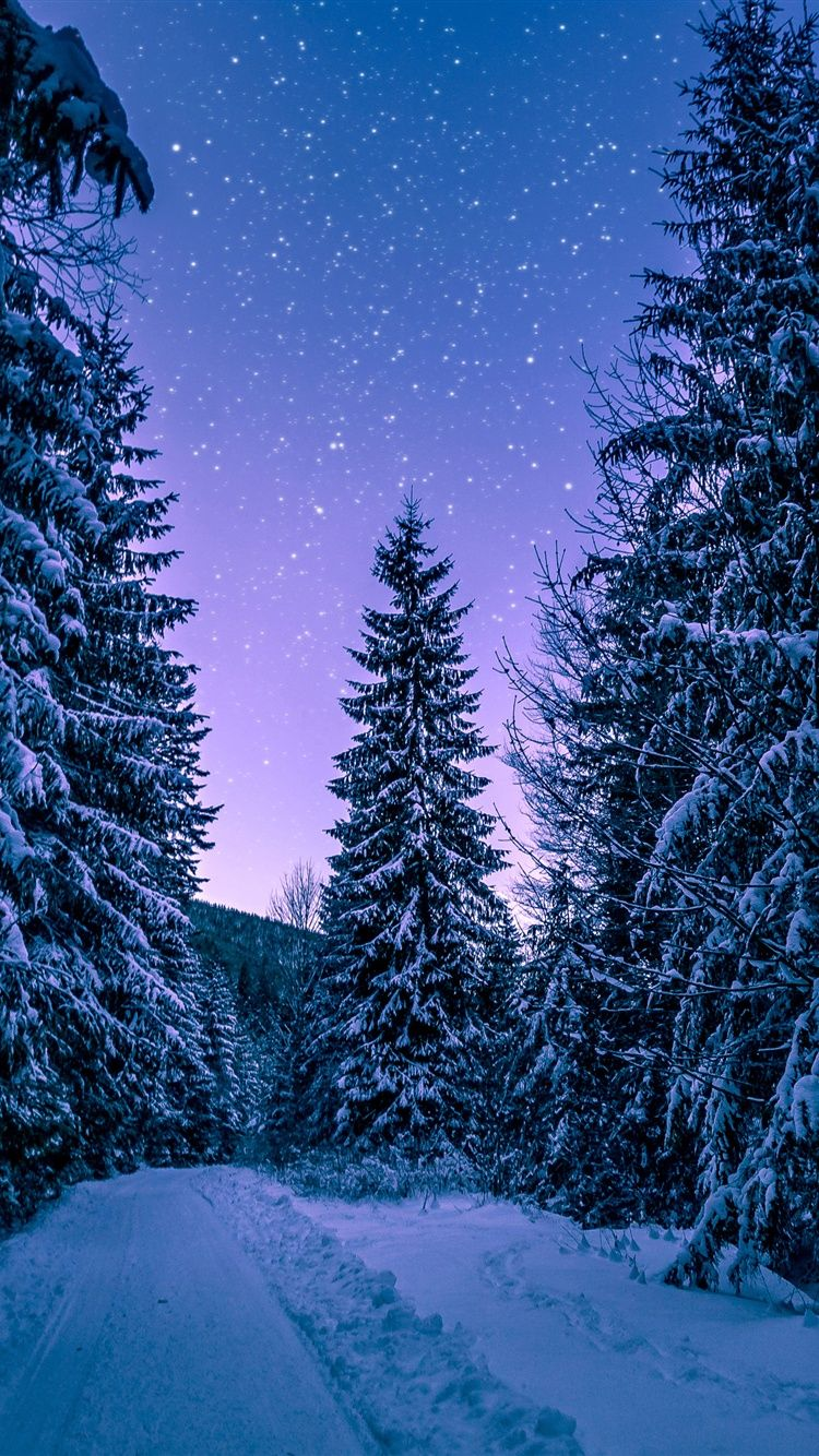 Seeing the stars in the Winter night Iphone wallpaper