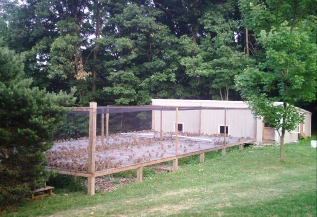 Birds Coops (House) | Quail coop, Chickens backyard ...