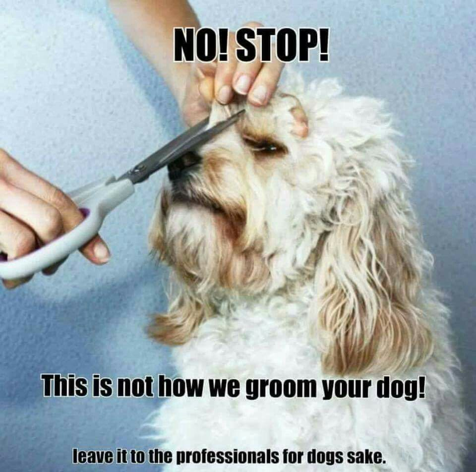 Save A Groomer Stop Grooming Your Own Dogs Xd Dog Grooming Salons Dog Grooming Tips Canine Grooming