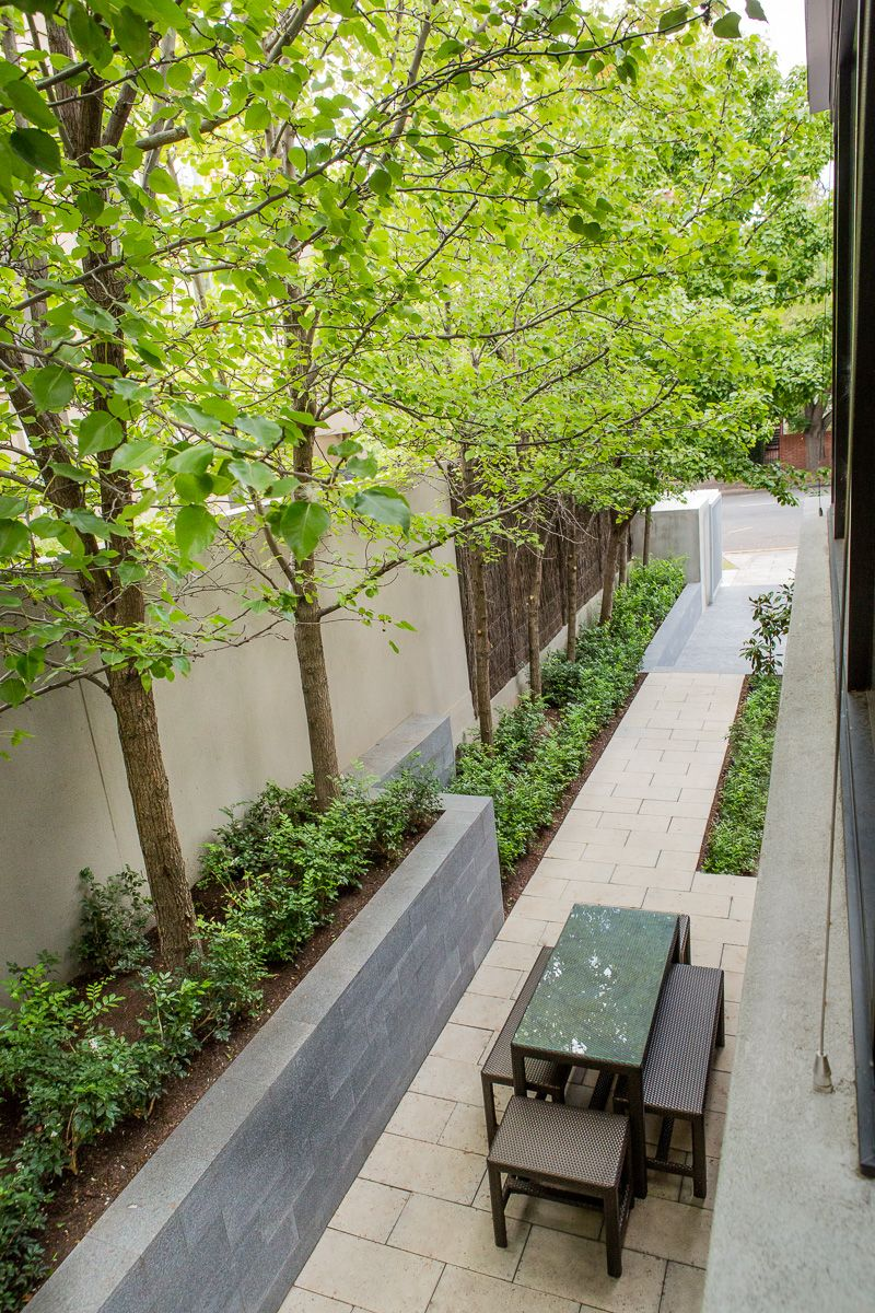 north adelaide residence pyrus trees supported in an off form concrete raised planter