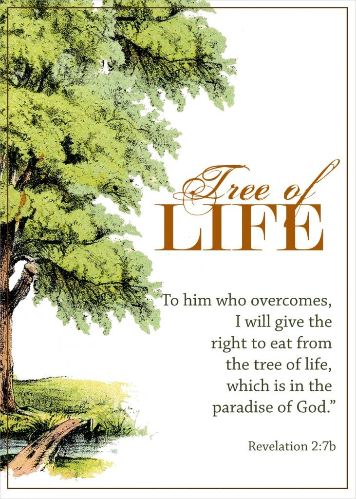 The biblical tree of life bounty of blessings tree of What is the meaning of tree