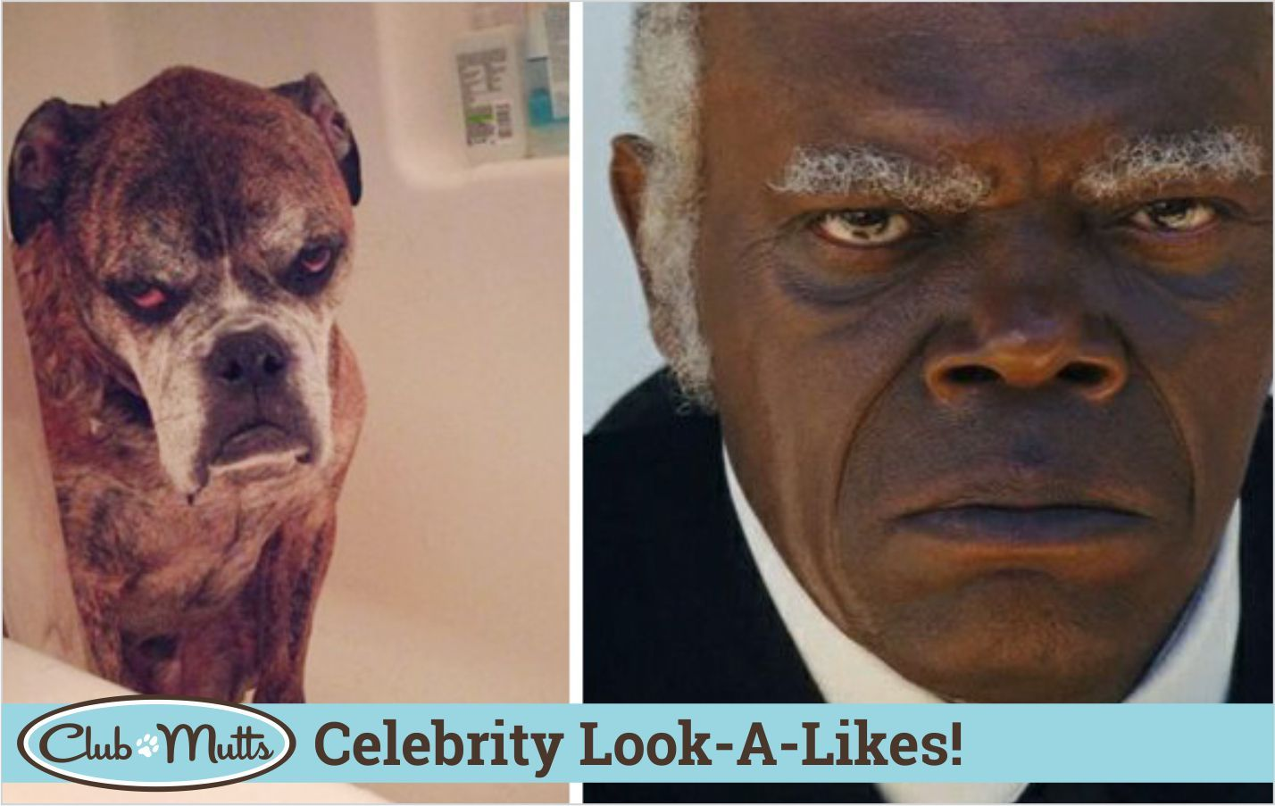 6 Days Of Celebrity Look A Likes Day 1 Samuel L Jackson This