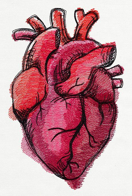 Photo of Painted Anatomical Heart | Urban Threads: Unique and Awesome Embroidery Designs