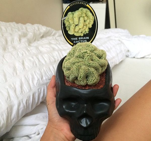 Help!!!! #succulent #cactus #brain #skull #vase #p