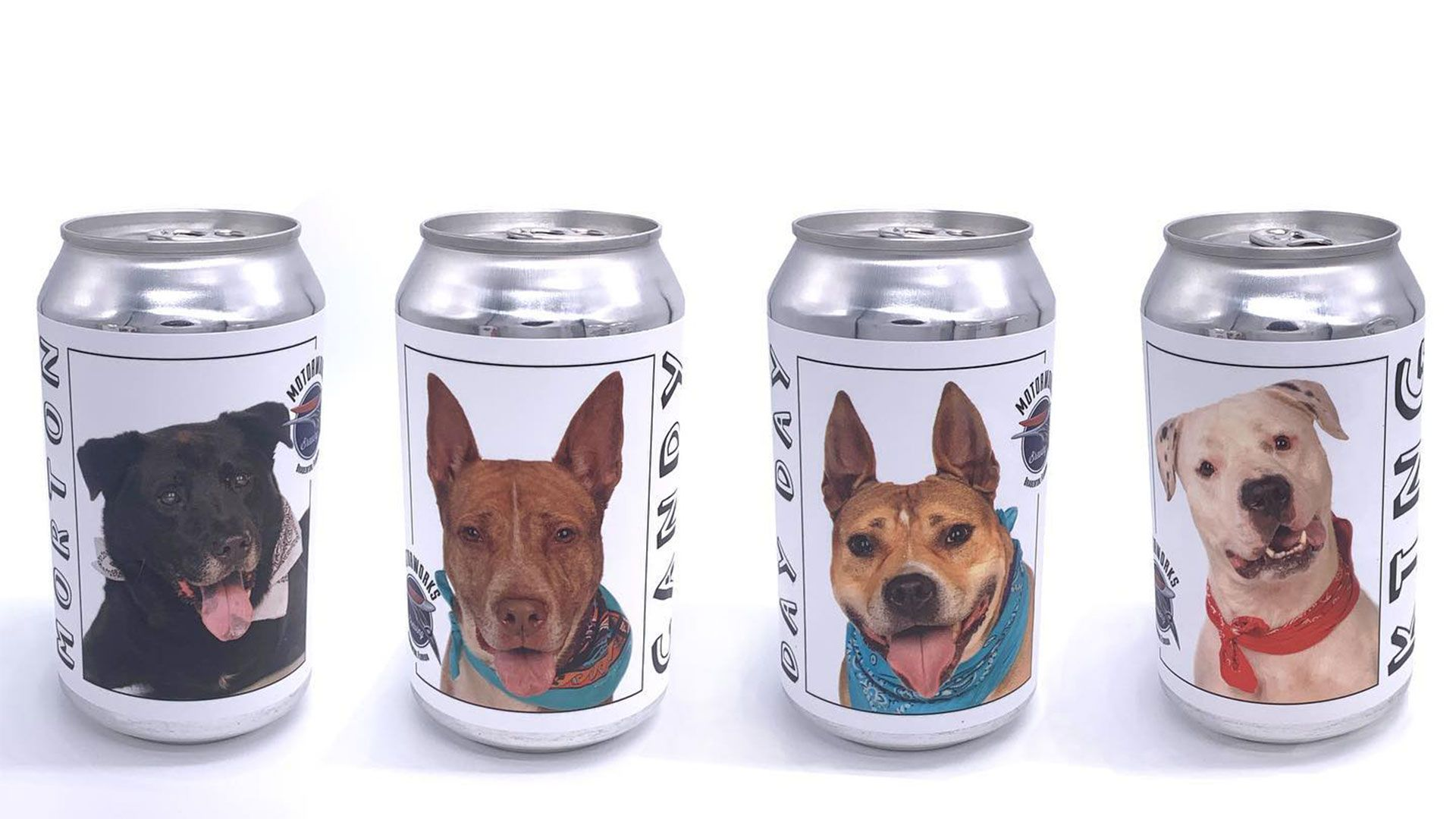 3 Years Later Minnesota Woman Finds Missing Dog On Beer Can From Florida Brewery Shelter Dogs Losing A Dog Brewery