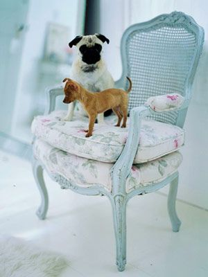 pugs make me smile, especially in aqua upholstered chairs :)