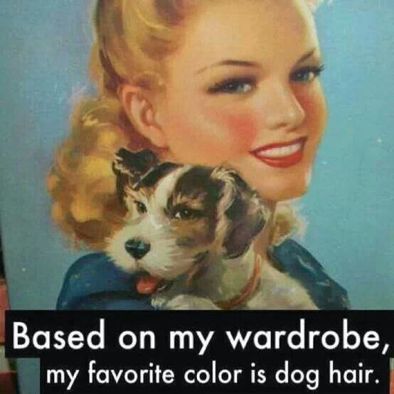 Dog Hair is a color!