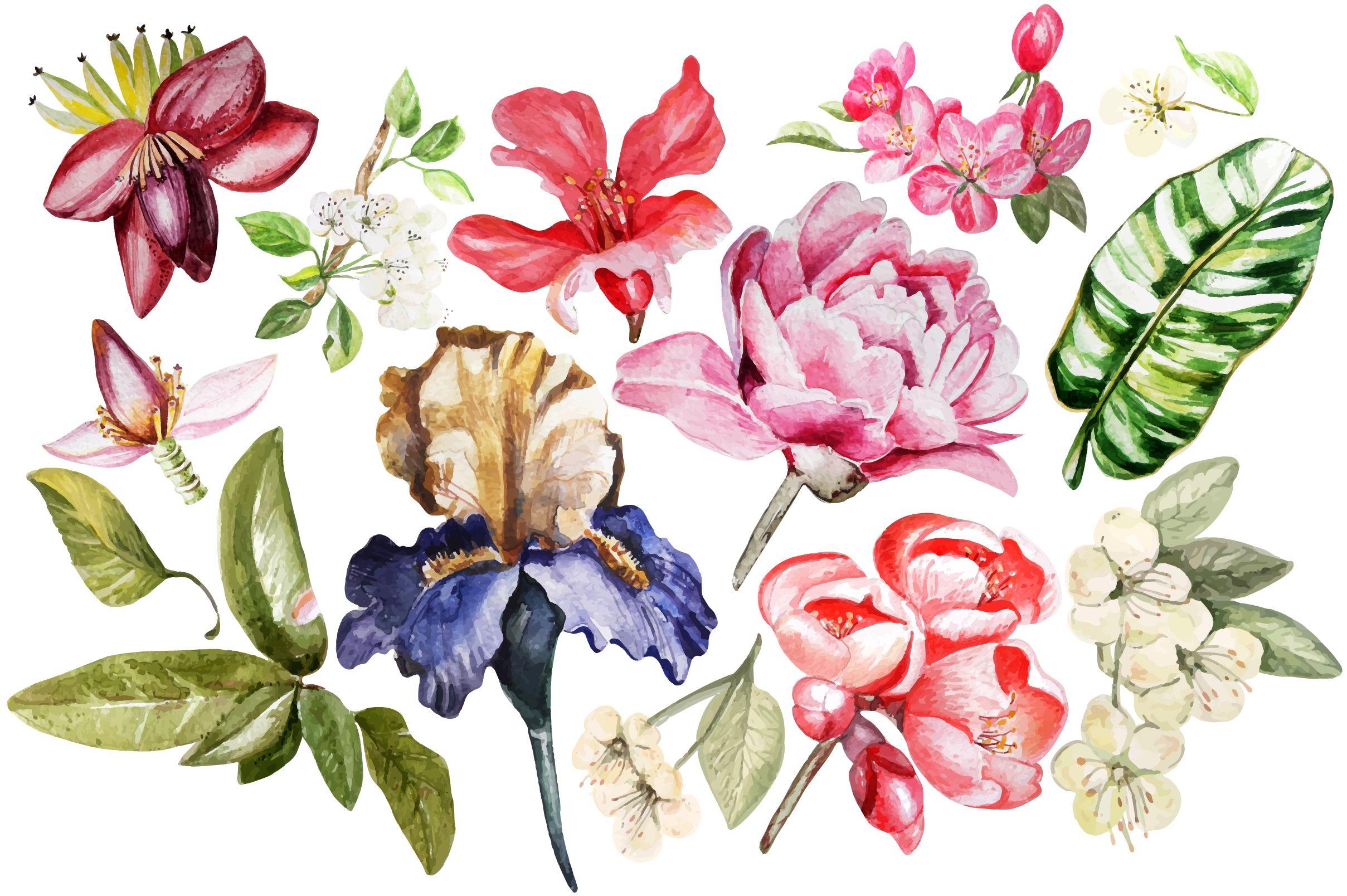 Beautiful Watercolor Flowers By Knopazyzy On Creativemarket