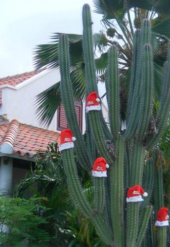 Christmas on Bonaire (Netherland Island in the Caribbean)