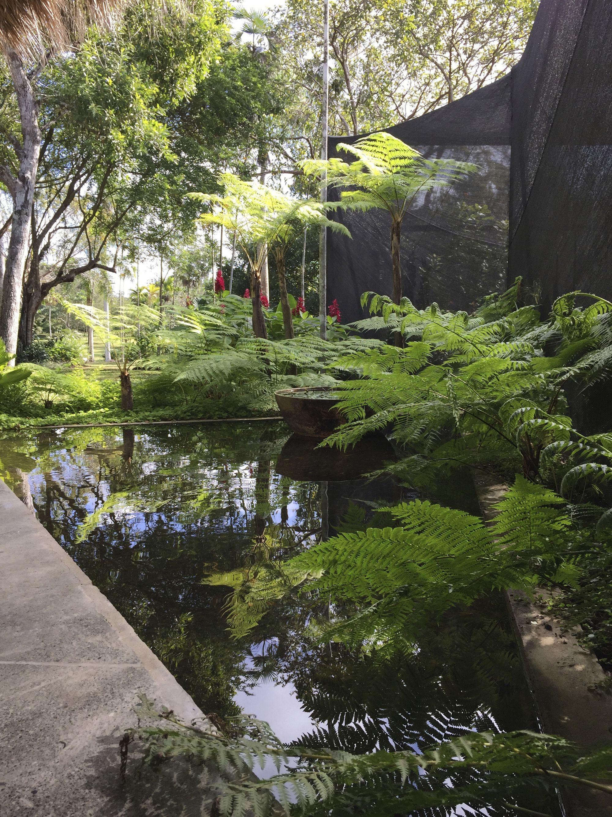 Garden water features  Galería de Jardín de las Mariposas  Emilio Olivo  Rosa Julian