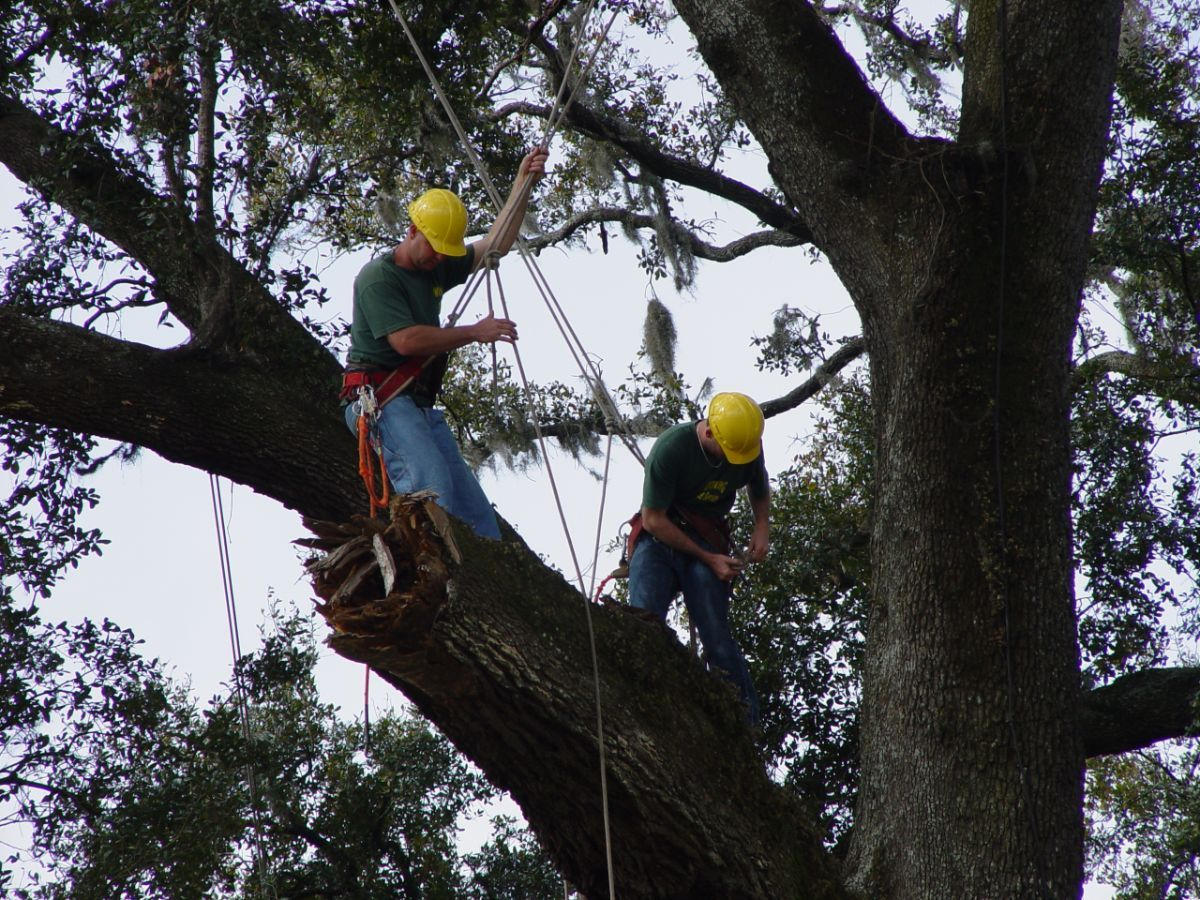 Dowling Tree Service serving the greater Gainesville, and