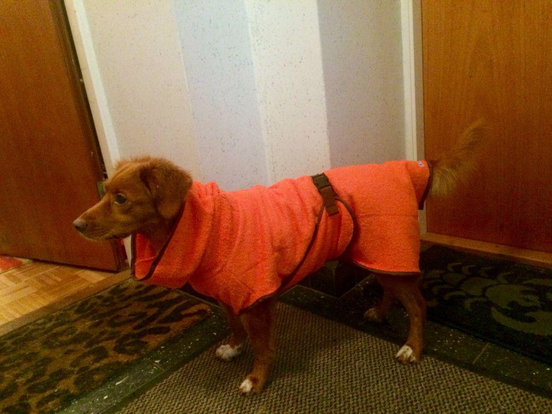Hunde-Bademantel …   Pinteres…