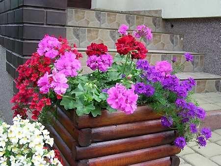 Kompozycje Balkonowe Ogrody Pamietajcie O Ogrodach Plants Garden