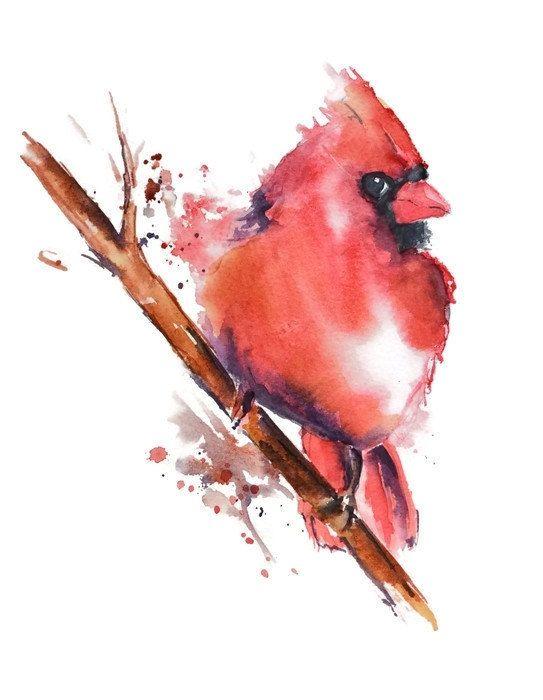 Cardinal Watercolor Art Print Nancy Knight Red Bird Watercolor