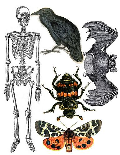 Print Sheets by CaraMia, via Flickr Printables Pinterest - halloween decoration printables