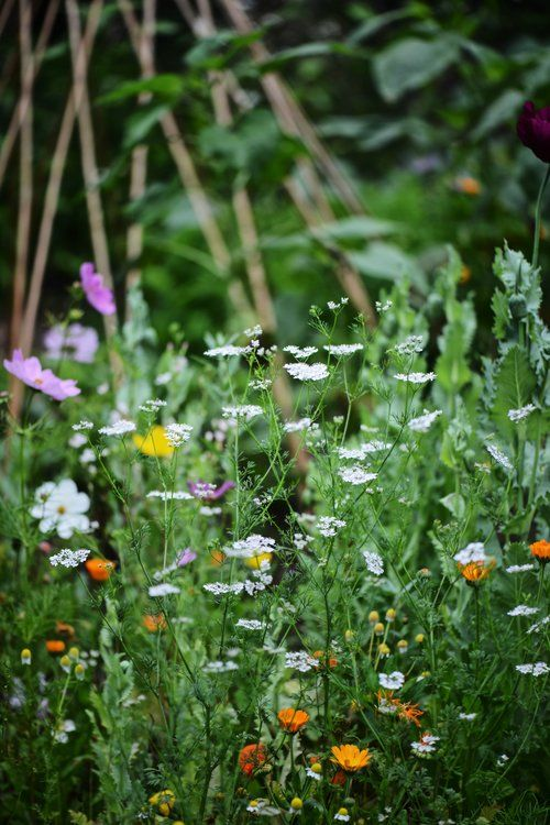 Early July In The Garden With Gardeners Supply Co. | Calendula, Flowers And  Gardens