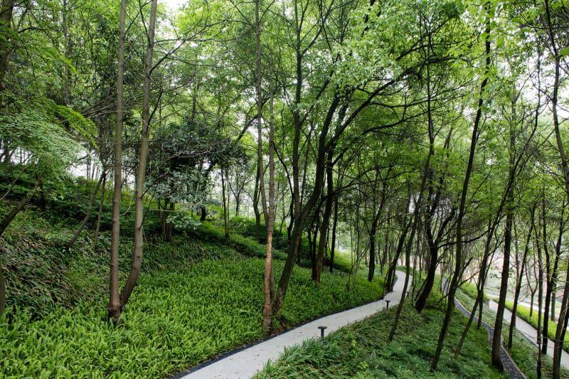 Z+T Studio · The Hillside EcoPark Landscape