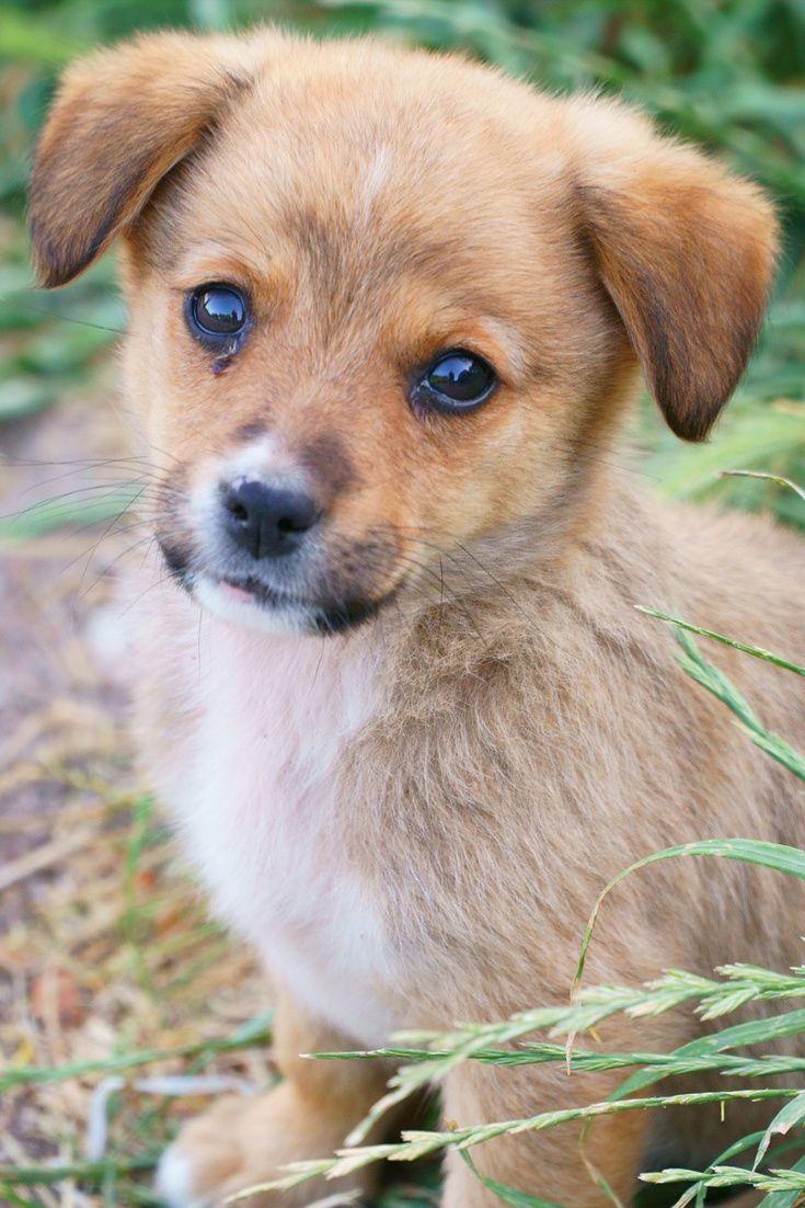 A Cute Small Puppy In The Grass Cute Puppy Dog Cuteanimals