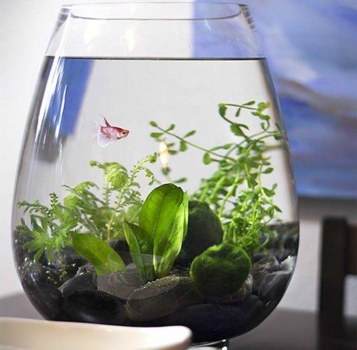 aquarium einrichtung sorgt f r das wohlf hlen der wassertiere schlafzimmer ideen pinterest. Black Bedroom Furniture Sets. Home Design Ideas