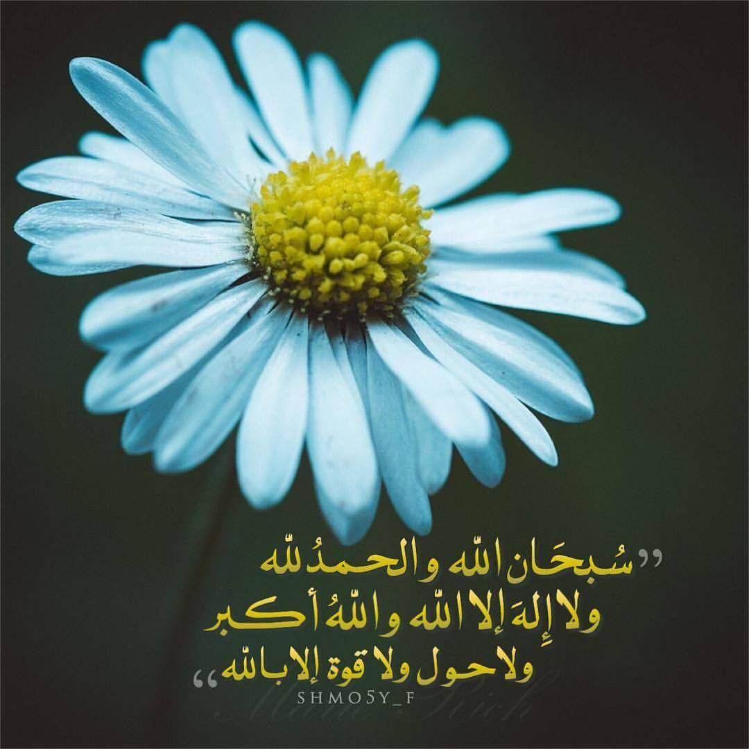 Shmo5yf صدقة جارية ذكر وذكر القرآن آيات تسبيح استغفار الوتر السعودية الإمارات العين دبي ابوظبي جدة مكة المدينة Beautiful Simplicity Flowers